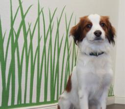 Ein Hund im Büro